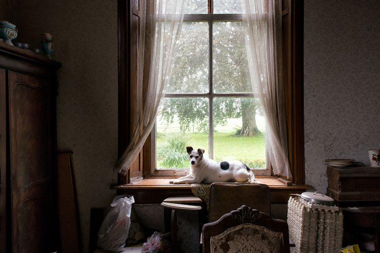 Het hondje van de broers Gait (71) en Jo (73).  Beeld Kees Muizelaar