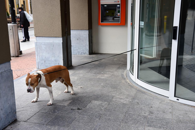 Een hond staat buiten bij een vestiging van ING bank, terwijl zijn baasje binnen staat. Beeld Marcel van den Bergh / de Volkskrant