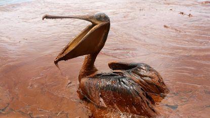 Olievervuiling Deepwater Horizon omvangrijker dan gedacht
