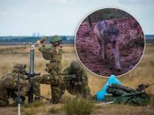 Wolf op schietterrein ASK 't Harde: moet Defensie nu het kruit droog houden?