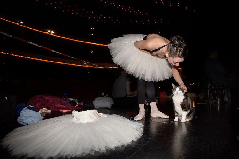 Danseres Wendeline Wijkstra aait Abatutu, de kat die meespeelt in Don Quichot Beeld Maartje Geels