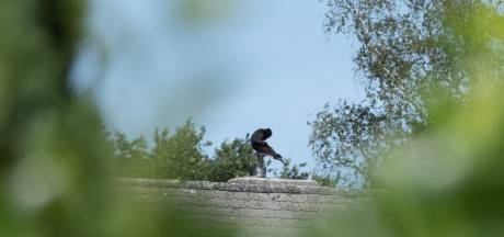 België: vermist aapje teruggevonden op dak van woning