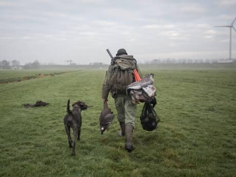 Provincie Utrecht geeft toestemming om kauwen en kraaien in vangkooien te doden: 'Een vreselijk middel'