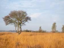 Provincie gaat verder met natuurherstel Wierdense Veld: grote gevolgen voor boeren