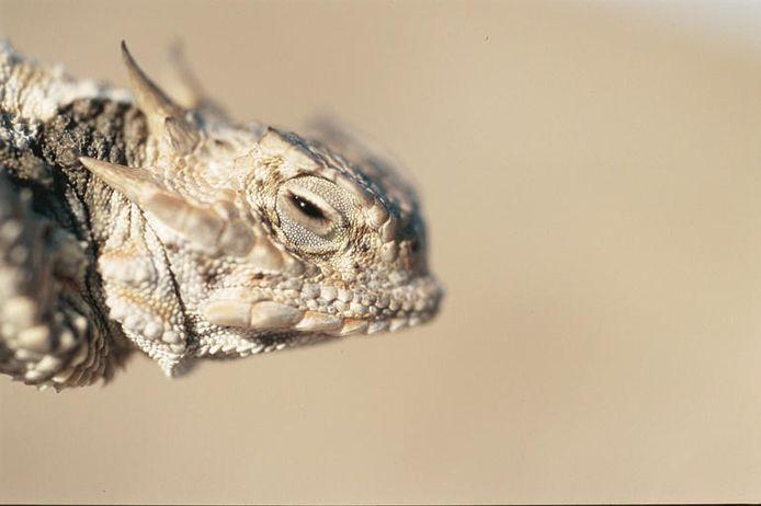Het gaat om doosschildpadden, padhagedissen (foto) en boomhazelwormen afkomstig uit Mexico.