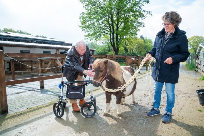 Psychologe Sieka Bos onderzoekt welke effecten het omgaan met pony's heeft op de kwaliteit van leven van ouderen met dementie.