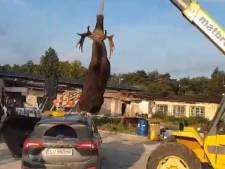 Dit gruwelijke ongeluk is de reden dat de elandtest bestaat