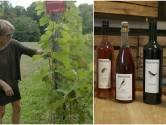"""Manueel 3,5 hectare druiven plukken... Dat is echt liefde."" Hilde Rutten is leading lady van wijndomein Haksberg in Tielt-Winge"