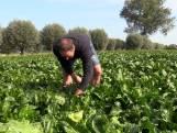 Marjo en Wilfried genieten van hun boerderij en kinderopvang