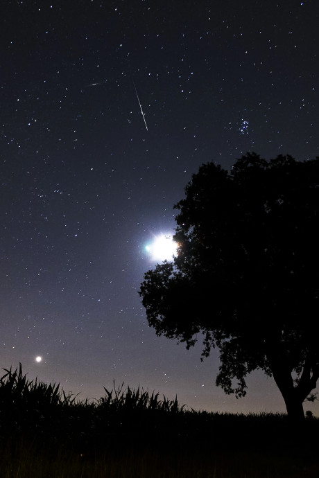 Zo zie je de grootste sterrenregen het best in eigen tuin