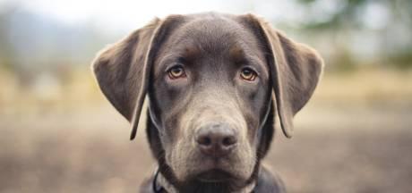 Dodelijke hondenziekte nog niet in grensregio, wel zorgen over te weinig inentingen