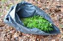 Honderd vuilniszakken vol hennep aangetroffen bij Breda.
