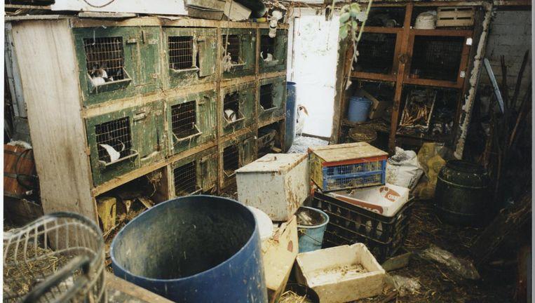 Verwaarlozing is een van de vormen van dierenmishandeling. Beeld null