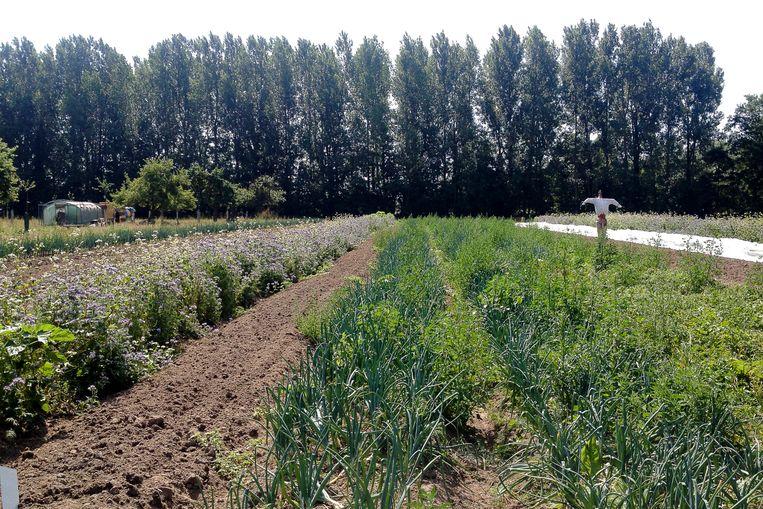 De boerderij in Heusden zal op dezelfde principes gebaseerd zijn als die in Gentbrugge.