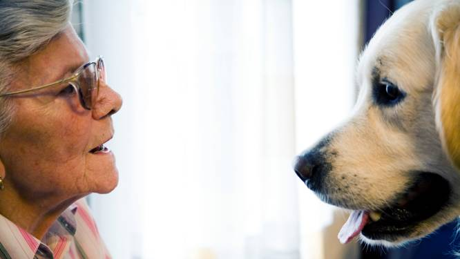 Deze eenzame en psychiatrische ouderen leven helemaal op als een hondje op bezoek komt