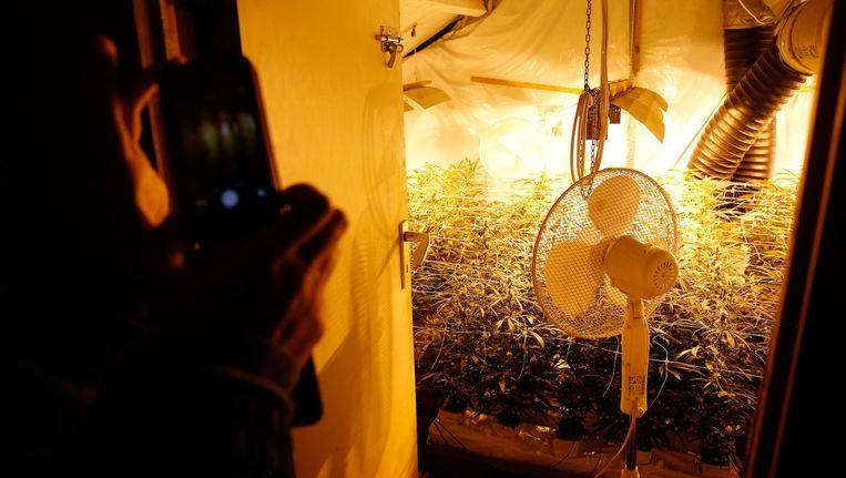 Hennepkwekerijen zijn een vorm van fraude die tot ontbinding van een huurcontract kunnen leiden. Beeld anp