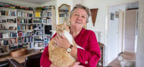 Oproep na reeks incidenten met katten in Haarle: 'Pas op uw huisdier, er is een kattenhater actief'
