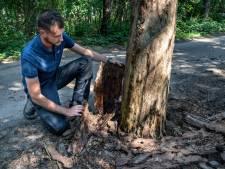 Kever vreet bos IJzeren Man aan; om verspreiding te voorkomen moeten bomen snel plat
