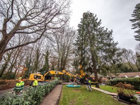 Deze boom gaat de Grote Markt in Zwolle in kerstsfeer brengen