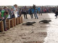 Publiek na ruim anderhalf jaar weer welkom bij vrijlaten zeehonden, drukte verwacht
