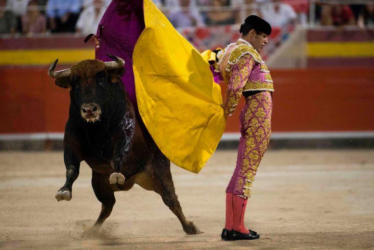 Spaanse matador Alejandro Talavante met stier tijdens het laatste stierengevecht in Palma de Mallorca op 3 augustus 2017. Beeld AFP