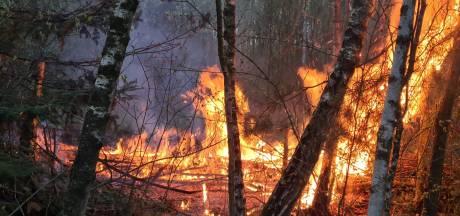 Beginnende bosbrand tijdig geblust in natuur bij Drunen, groep vluchtende jongeren gezien