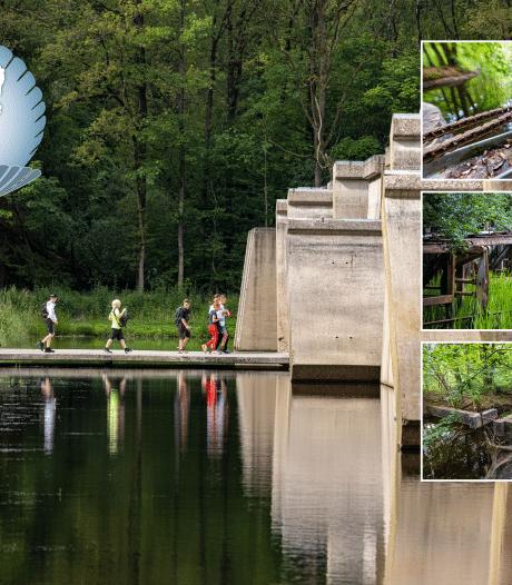 Dit bos laat de verborgen geheimen zien die ons land wereldberoemd hebben gemaakt