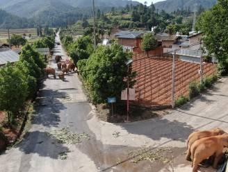 """""""Allé man, waar blijf je?"""" Reizende kudde olifanten in China probeert achterop geraakt mannetje te roepen met luid getrompetter"""