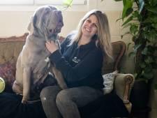 Nagenoeg lege hokken bij dierenasiel Brammelo: 'Zelfs 14-jarige hond geplaatst, geweldig!'