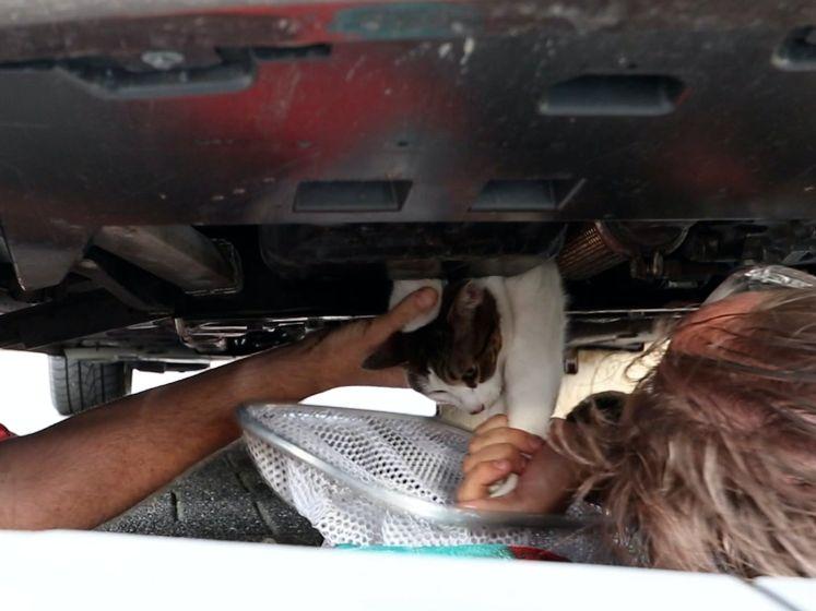 Video van de Dag | Bijzondere reddingsactie voor 'motorkat' Delphi: naar de garage!