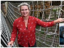 Waarom Dierenpark Amersfoort de ontsnapping van een hyena stilhield: 'Was voor ons een klein incident'
