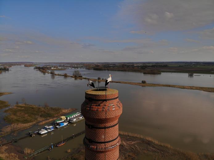 Ooievaars 'genieten' van het uitzicht vanaf de schoorsteen van de voormalige steenfabriek De Bovenste Polder in Wageningen.