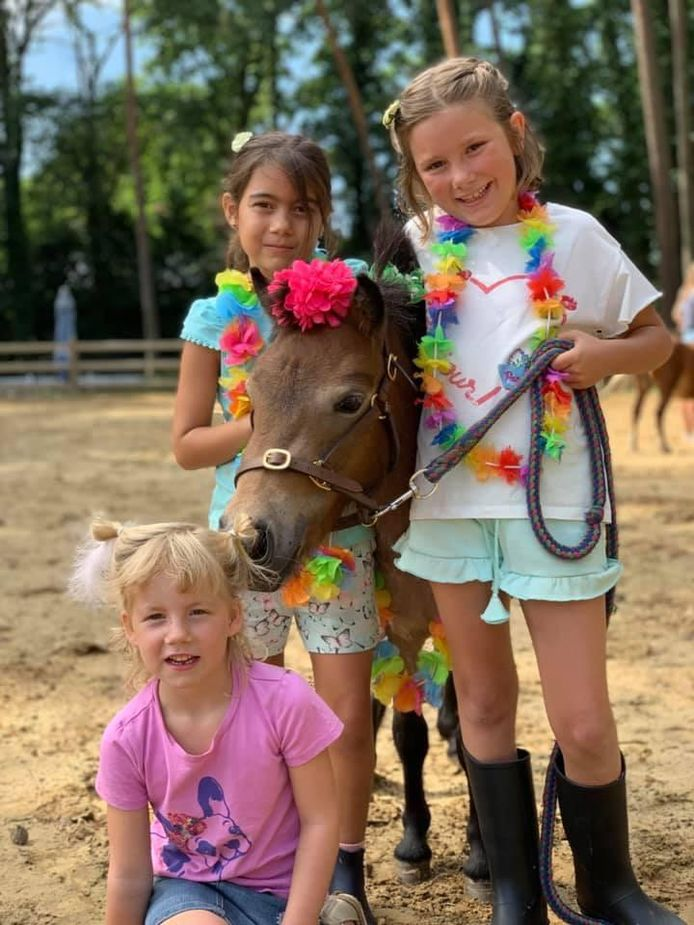 Een zomerkamp van vorig jaar met kleine pony's