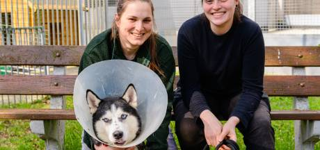 Kreupele hond Shila werd gedumpt in het bos: 'Had eigenaar geen geld voor de dierenarts?'
