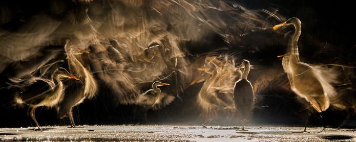 Foto van Van de rosse stekelstaart tot de sneeuwuil: dit zijn de mooiste vogelfoto's