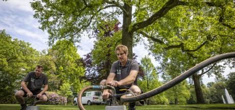 Burgers mogen meepraten over bomen in Rijssen-Holten: 'Dat groen is belangrijk'