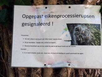 """Lubbeek gaat processierupsen ecologisch bestrijden: """"Nestkastjes voor mezen en vleermuizen plaatsen"""""""