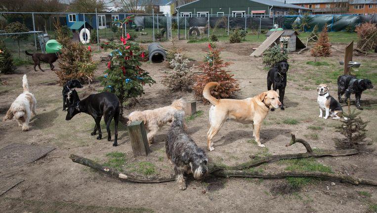 Het gaat de Doggiedoggers echter om de honden en die zijn niet statusgevoelig. Beeld Dingena Mol
