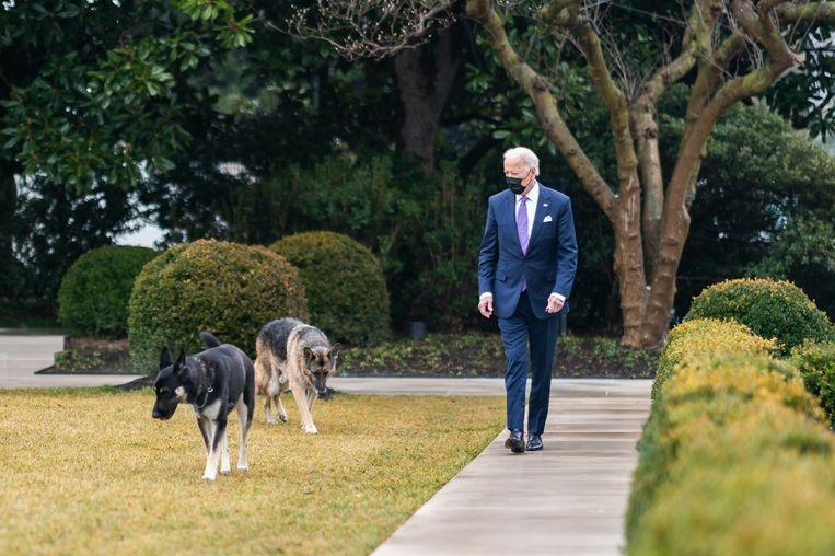 President Joe Biden met zijn honden Champ en Major in het Witte Huis. Beeld Photo News