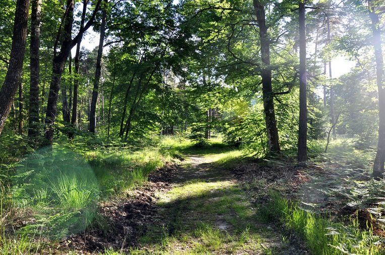 Bos van Fontainebleau. Beeld rv