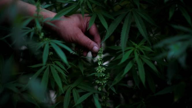 Cannabisplantage met 700 planten op bovenverdieping van woning