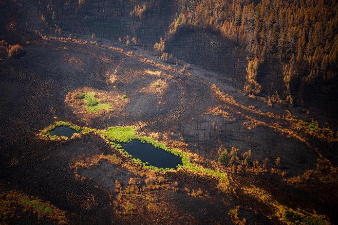 Een bos is bijna volledig verwoest door de branden.