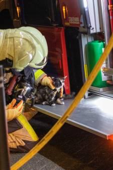Brandweer redt katten uit woning die vol rook staat in hartje Kampen
