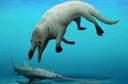 Le Phiomicetus anubis pesait environ 600 kilos et mesurait 3 mètres de long.