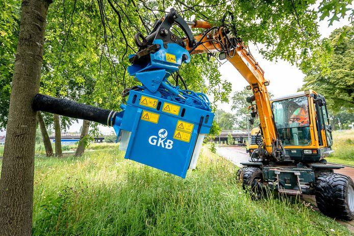 Rotterdam stapt over op de 'stofzuiger-op-afstand' voor de bestrijding van de eikenprocessierups, zoals hier aan de Gordelweg. Door de uitvinding van aannemer GKB uit Barendrecht is beschermende kleding en perslucht niet meer nodig.