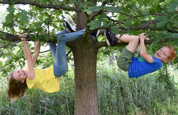 Elk gezin kan een gratis boom bestellen.