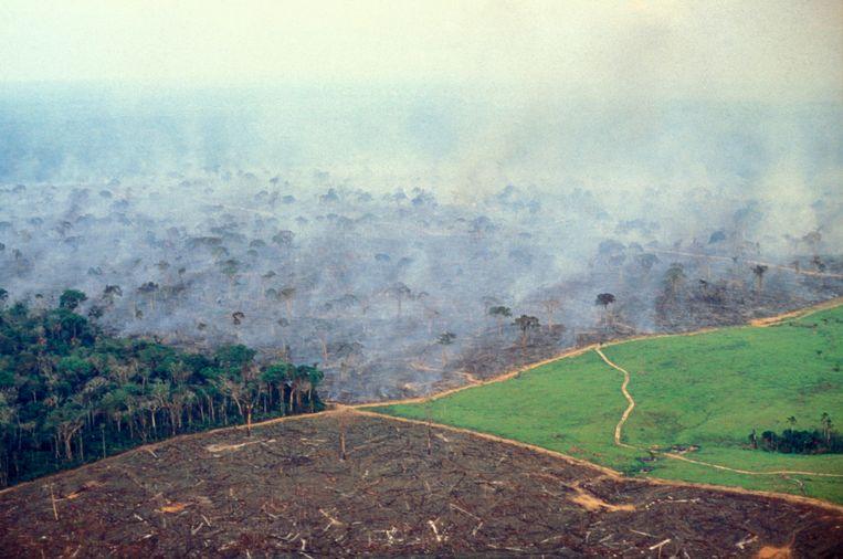 Een bosbrand in de Amazone. Beeld LightRocket via Getty Images