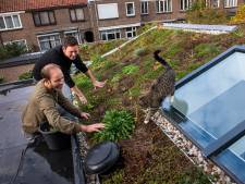 Den Haag zet plan voor schonere energie tóch door; tuintjes op alle daken
