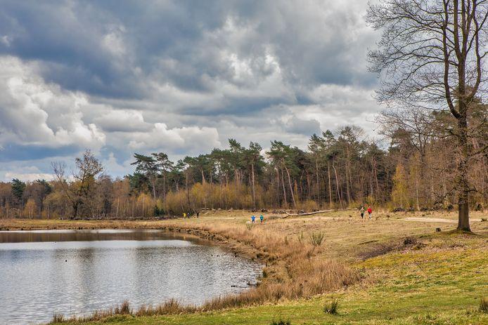 De Boswachterij Dorst is populair bij wandelaars, ruiters, mountainbikers en hondenbezitters. Daar komen na de zomer galloway-runderen bij.