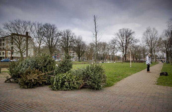 Kerstbomen liggen langs de kant van de weg na de feestdagen.